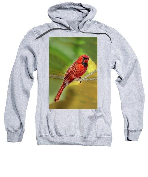Male Cardinal Headshot  Sweatshirt