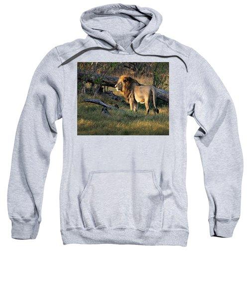 Male Lion In Botswana Sweatshirt