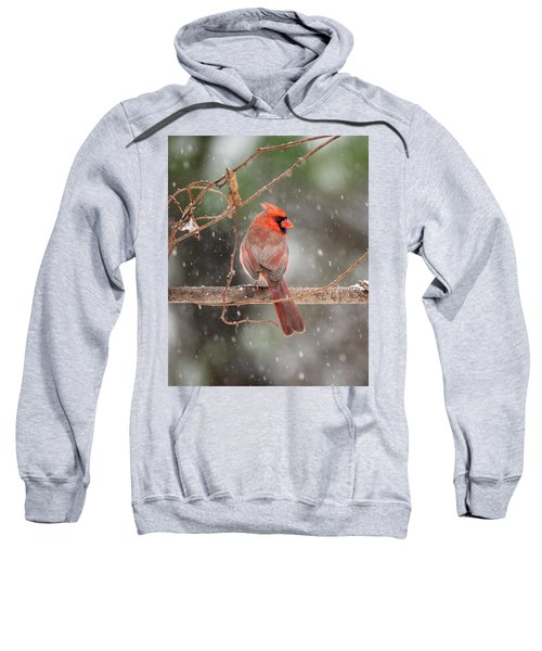 Male Red Cardinal Snowstorm Sweatshirt