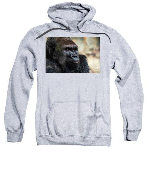 Male Western Gorilla Looking Around, Gorilla Gorilla Gorilla Sweatshirt
