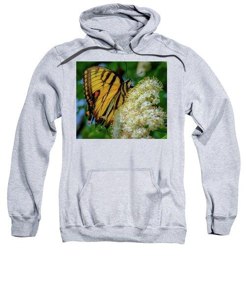 Manassas Butterfly Sweatshirt