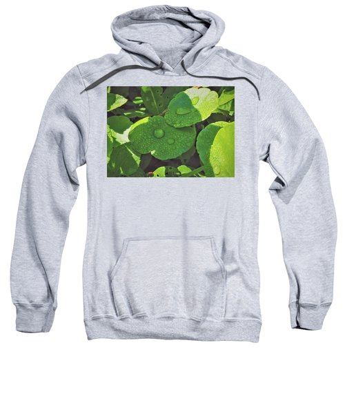 Morning Dew Sweatshirt