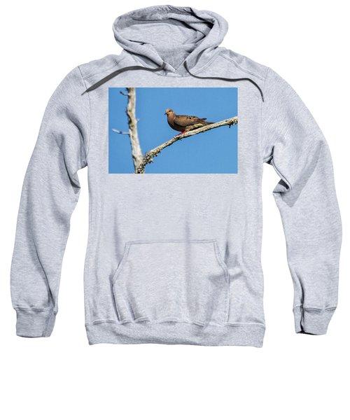 Mourning Dove Sweatshirt