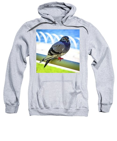Mr. Pigeon Sweatshirt