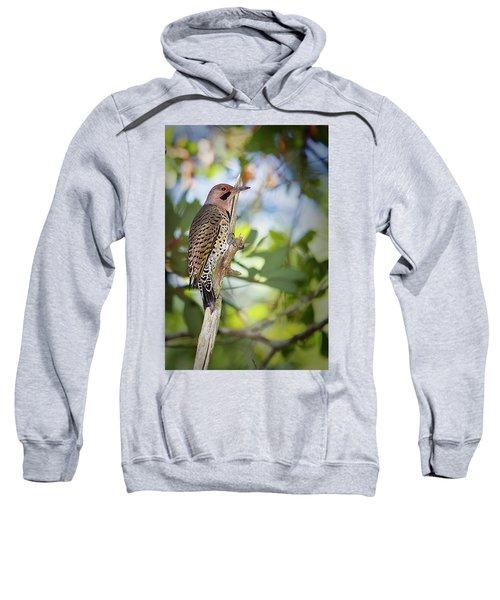 Northern Flicker Sweatshirt