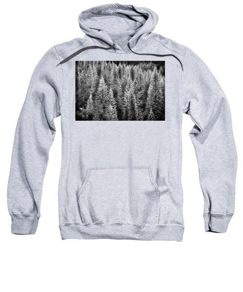 One Of Many Alp Trees Sweatshirt