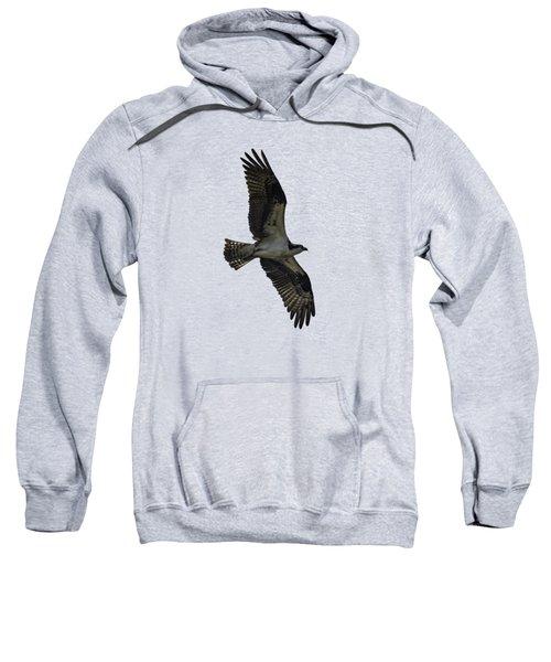 Osprey Soaring Sweatshirt