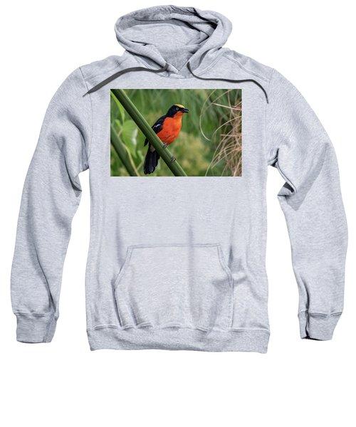 Papyrus Gonolek Sweatshirt