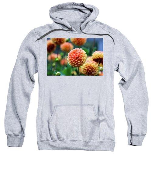 Peach Dahlias Sweatshirt