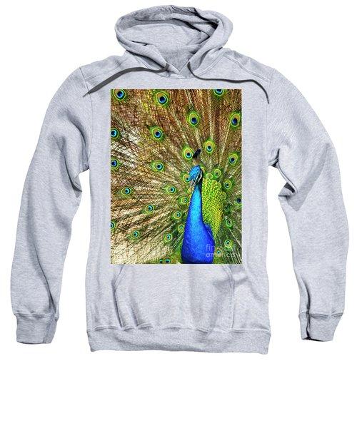 Peacock Colors Sweatshirt