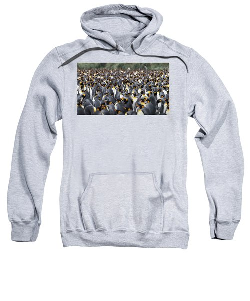 Penguinscape Sweatshirt