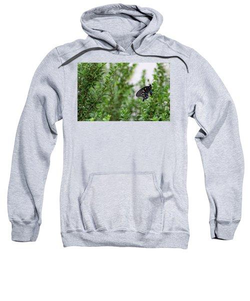 Pipevine Swallowtail Sweatshirt