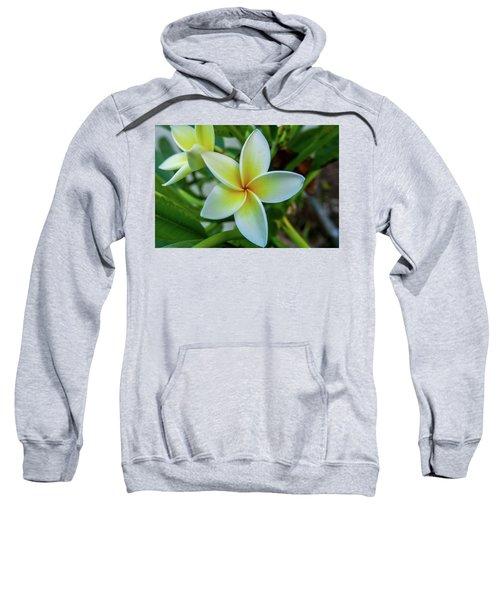 Plumeria In Bloom Sweatshirt