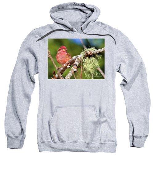 Purple Finch Sweatshirt