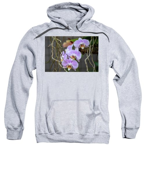 Purple Orchids Sweatshirt