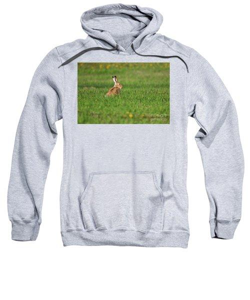 Rabbit Chews Sweatshirt