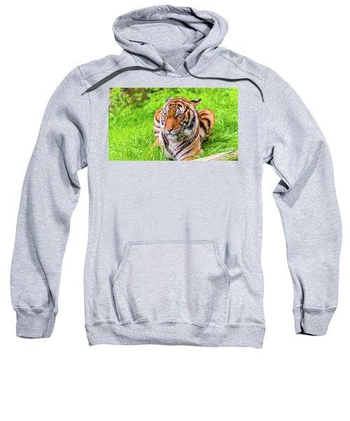 Ready To Pounce Sweatshirt