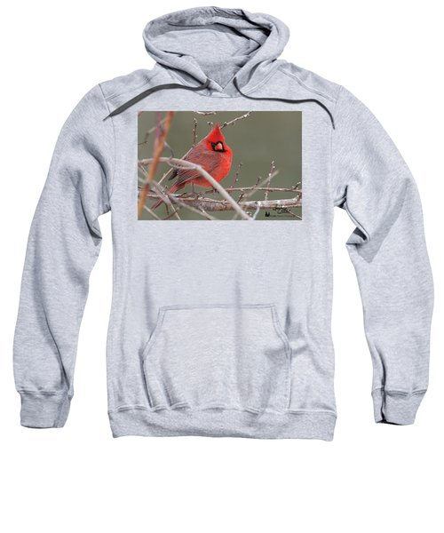 Red In Winter Sweatshirt