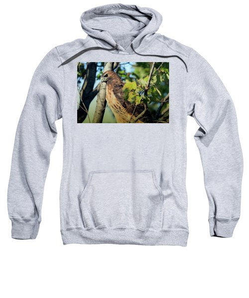 Red-tailed Hawk Looking Down From Tree Sweatshirt