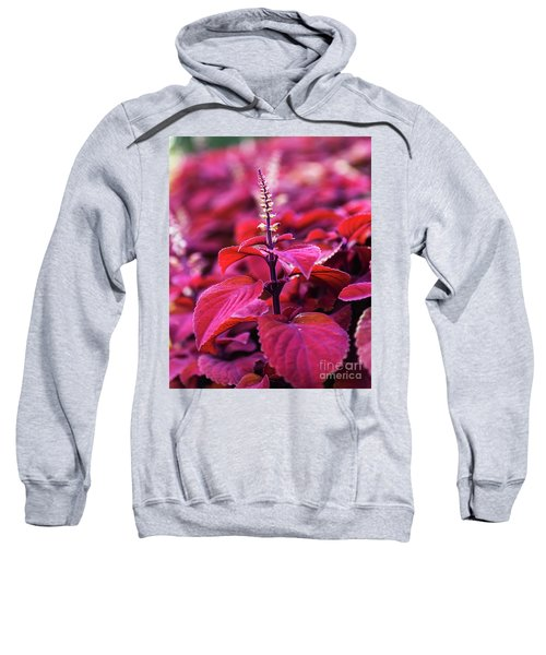 Reds Sweatshirt