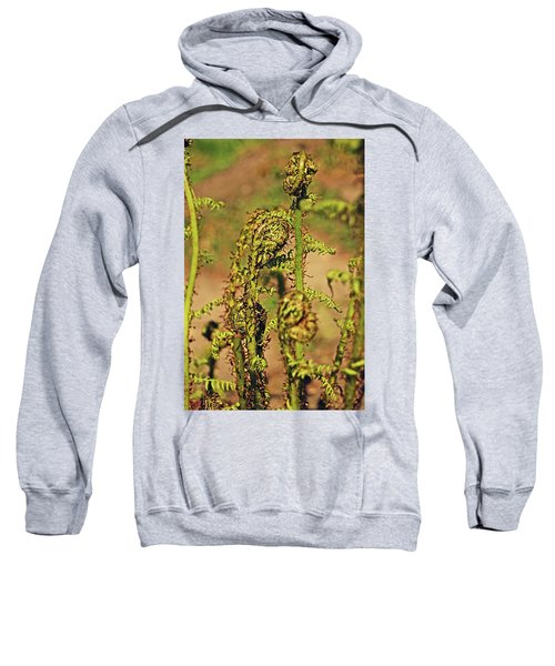 Rivington Terraced Gardens. Fern Frond. Sweatshirt