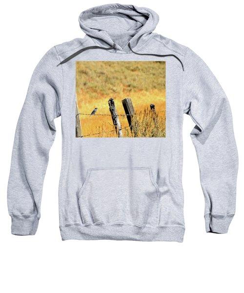 Rocky Mountain Blue Bird Sweatshirt