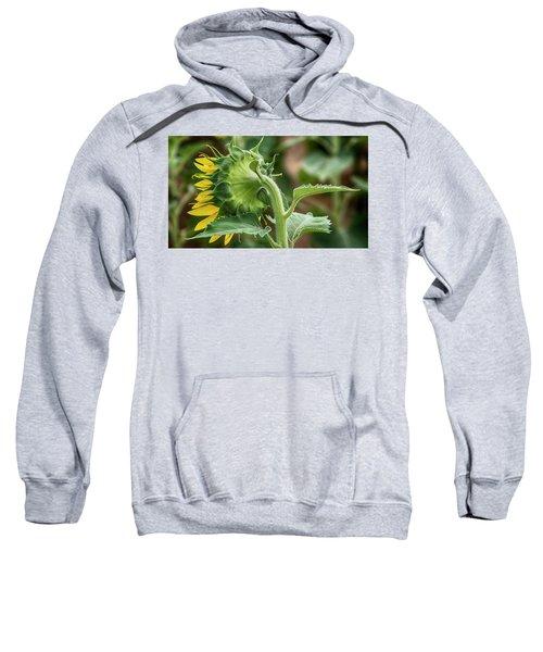 Shy Sunflower  Sweatshirt