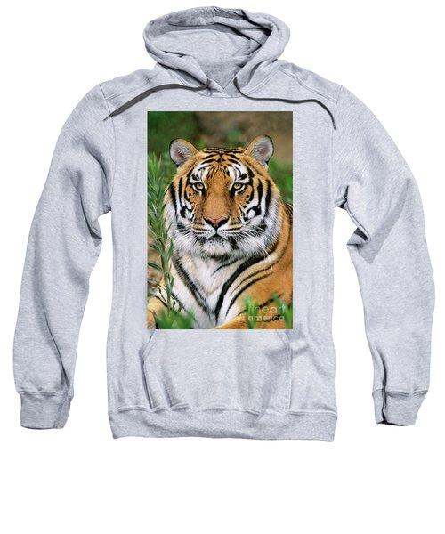 Siberian Tiger Staring Endangered Species Wildlife Rescue Sweatshirt