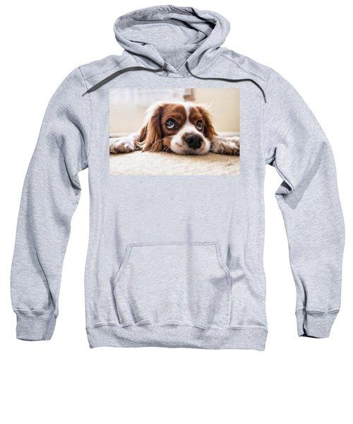 Spaniel Puppy Dwp2785074 Sweatshirt