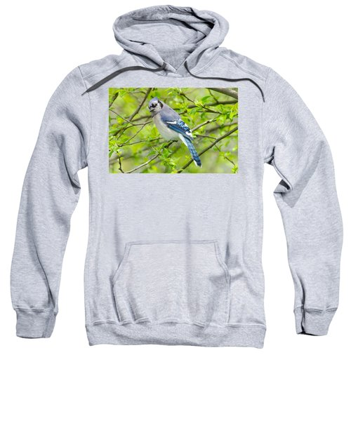 Springtime Bluejay Sweatshirt