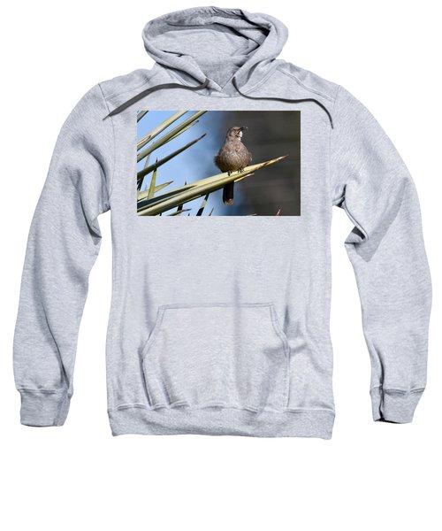 Squawker Sweatshirt