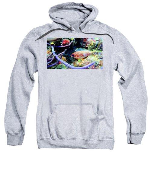 Squirrel Fish Sweatshirt