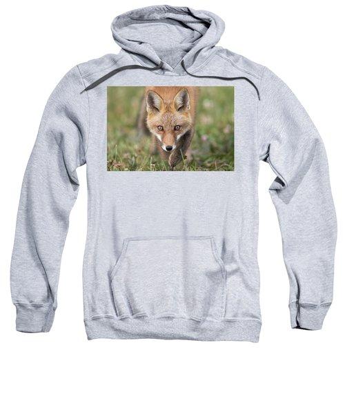 Stalked Sweatshirt