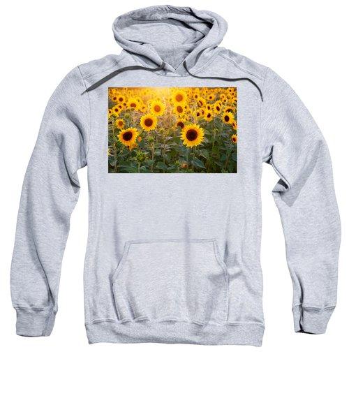 Sunflowers Field Sweatshirt
