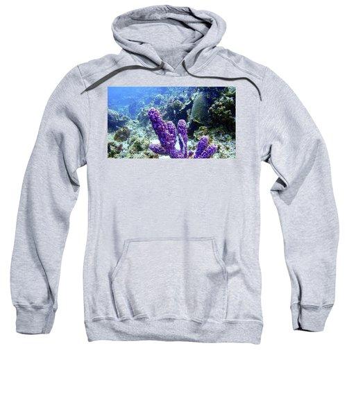 The Purple Sponge Sweatshirt