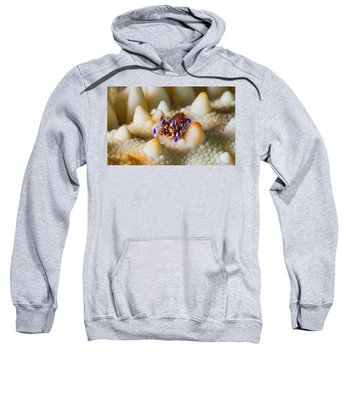 Tiny Big World Sweatshirt
