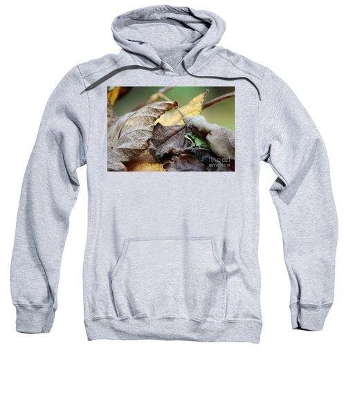 Tree Frog Seeking Shelter Sweatshirt
