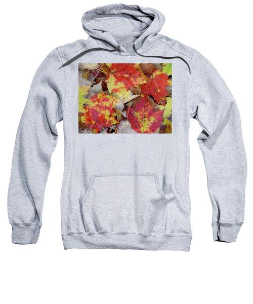 True Autumn Colors Sweatshirt
