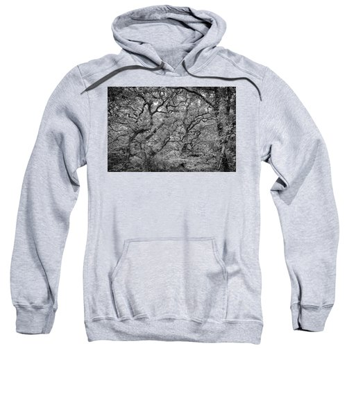 Twisted Forest Sweatshirt