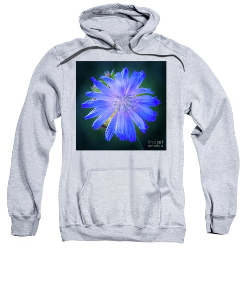 Vivid Blue Chicory Blossom Close-up With Its Delicate Petals And Stamen Sweatshirt