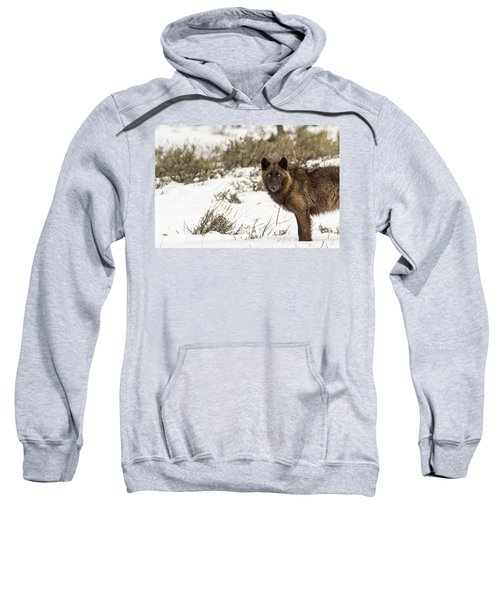 W12 Sweatshirt
