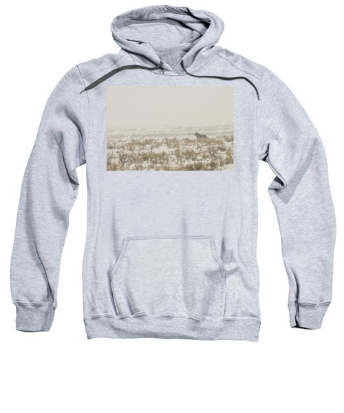 W34 Sweatshirt
