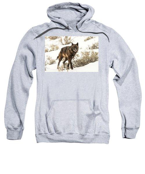 W38 Sweatshirt