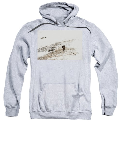 W52 Sweatshirt