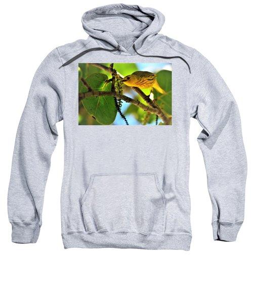Warbler's Delight Sweatshirt