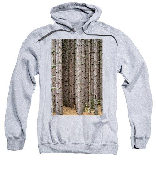 White Pines Sweatshirt