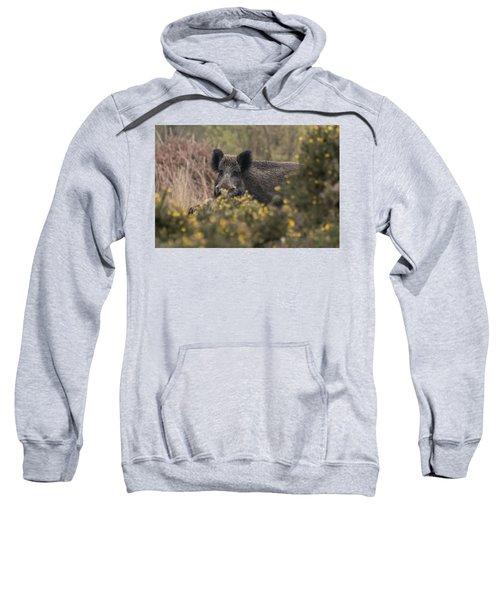 Wild Boar Sow Sweatshirt