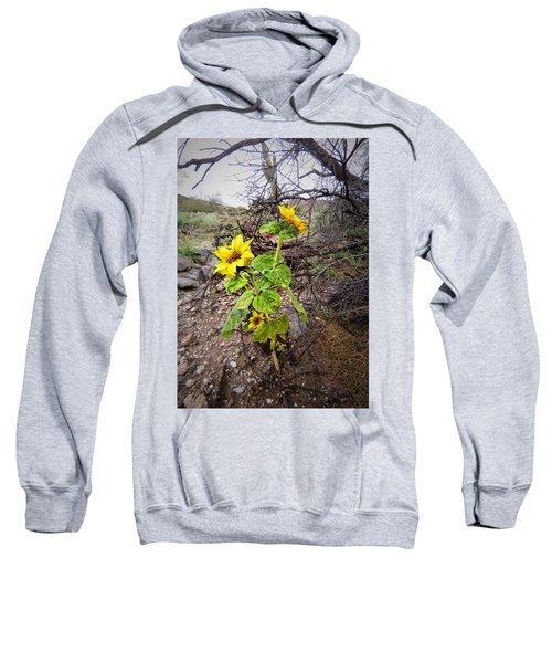 Wild Desert Sunflower Sweatshirt