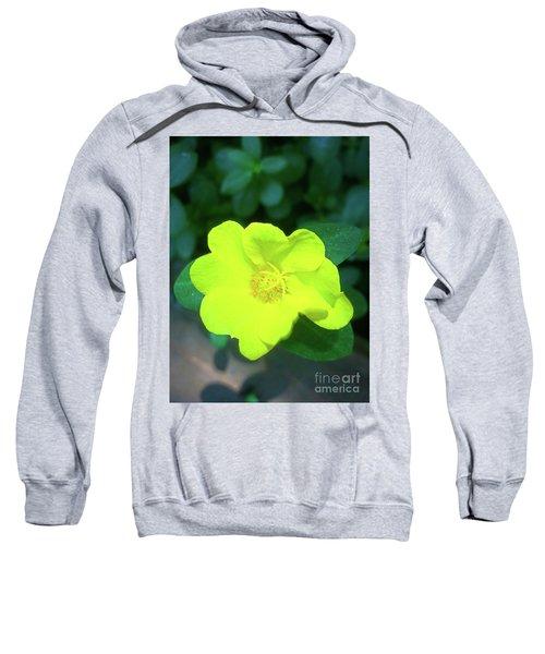 Yellow Hypericum - St Johns Wort Sweatshirt