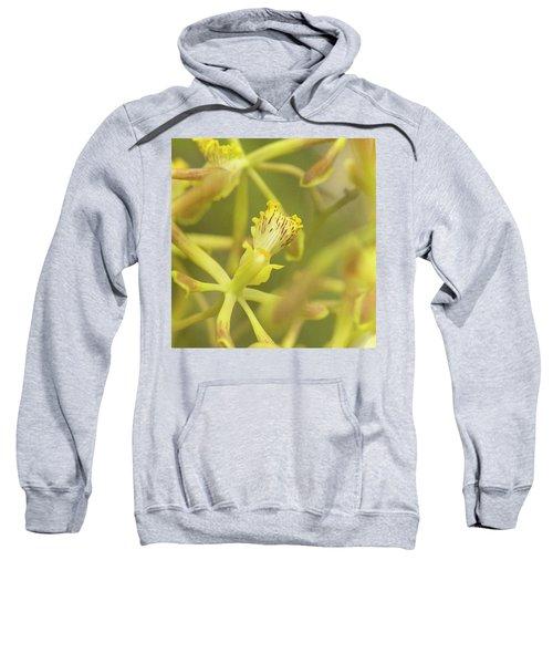 Yellow Orchid Sweatshirt